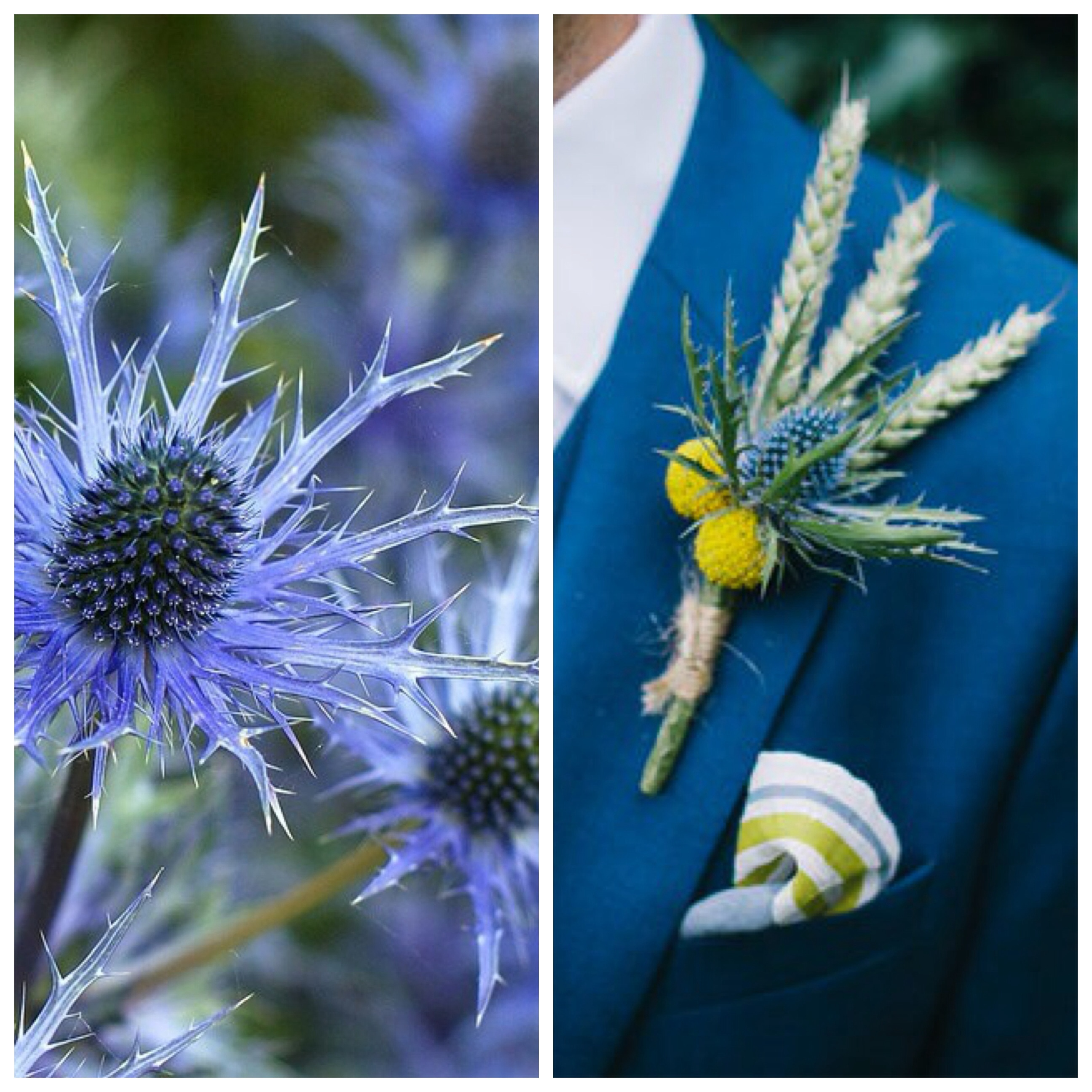 Wild Flowers For Wedding: 10 Wild Flower Options For A Country Wedding