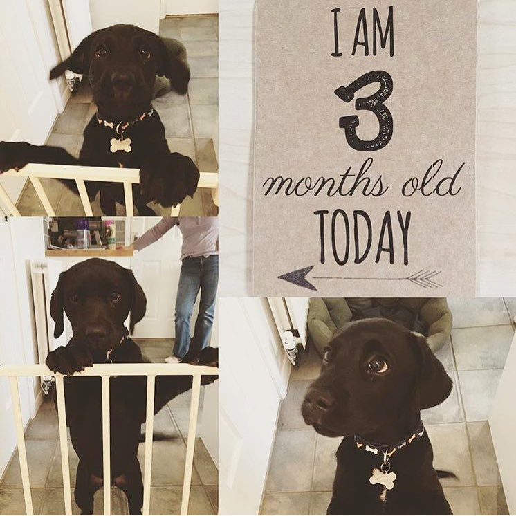 Baby Milestone cards for pets