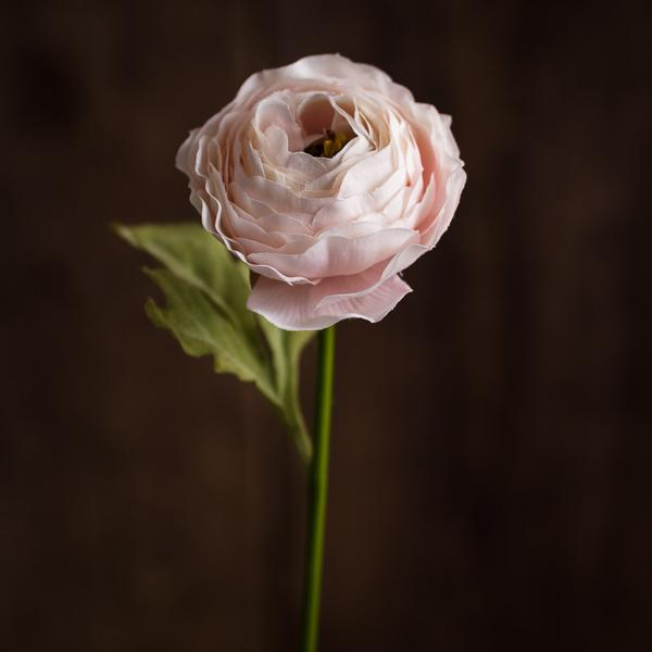 Ranunculus Pink Abigail Ahern