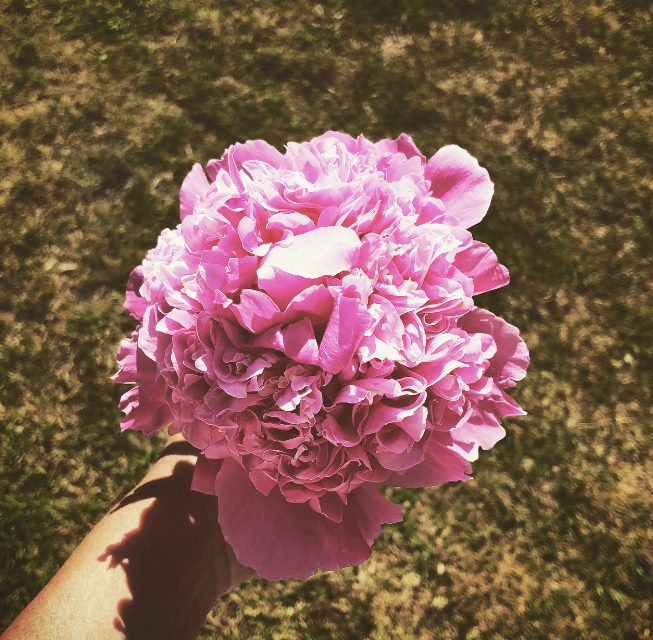 Which wedding flowers cause hay fever?
